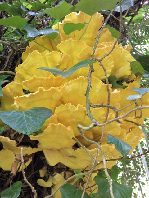 Un dr le de champignon jaune sur un arbre espace graphique - Champignon sur tronc d arbre ...