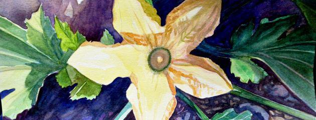 Aquarelle de fleur de courgette