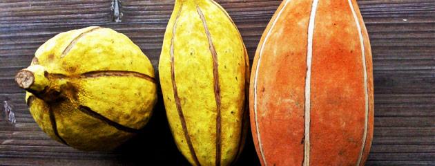Gousses de baobab