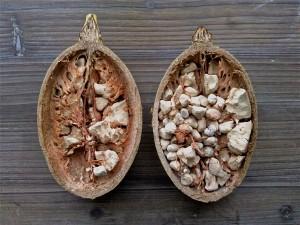 Graines de baobab