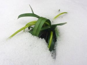 Sortie du Perce-neige