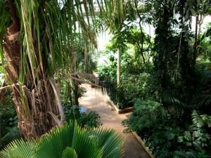 Intérieur des serres de Kew Gardens
