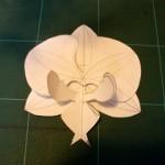 Maquette de la fleur en papier