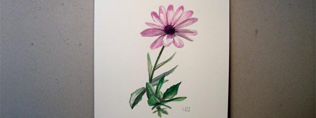 Aquarelle d'un Osteospermum