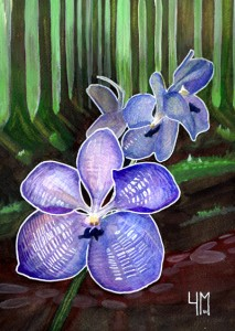 Vanda Aquarelle