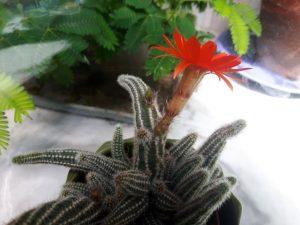 Fleur rouge de profil