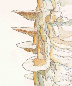 Champignons sur un arbre