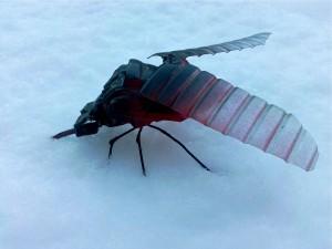 Moustique dans la neige