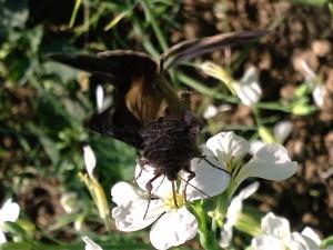 Papillon en gros plan