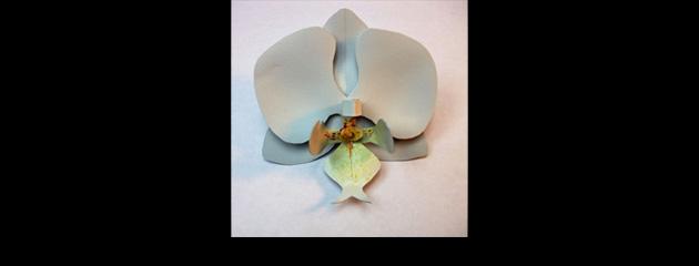 Phalaenopsis en pvc
