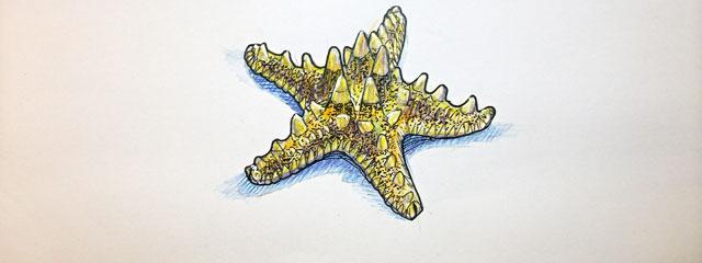 Dessin d'une étoile de mer au crayons de couleurs