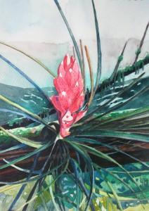 Aquarelle de Tillandsia sur la canopée