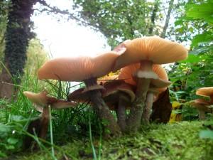 champignons et mousse