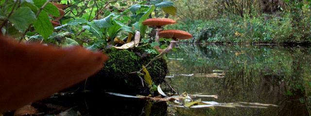 Champignons rivière