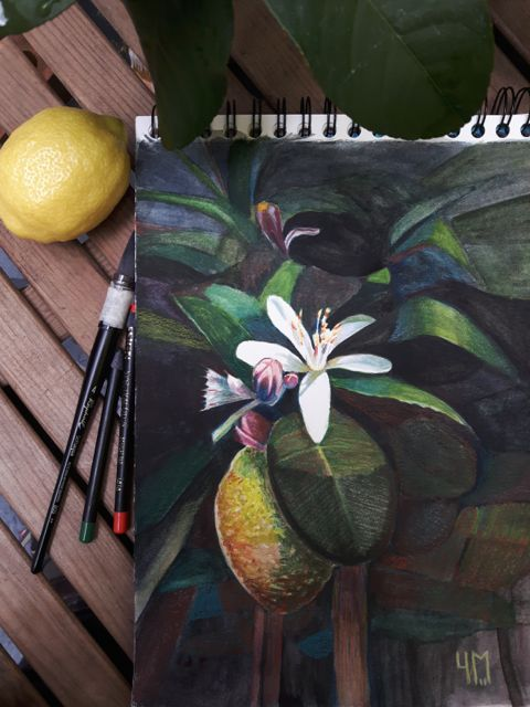 Aquarelle de citronnier