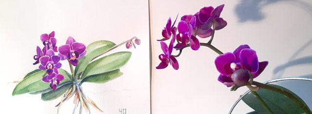 Aquarelle de l'orchidée