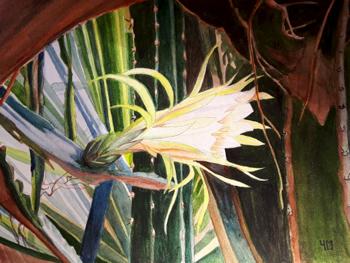 Hylocereus undatus (Fruit du Dragon, Pitaya)