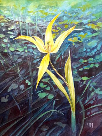 Aquarelle de tulipe