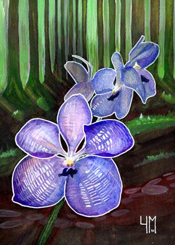 orchidée Vanda, aquarelle
