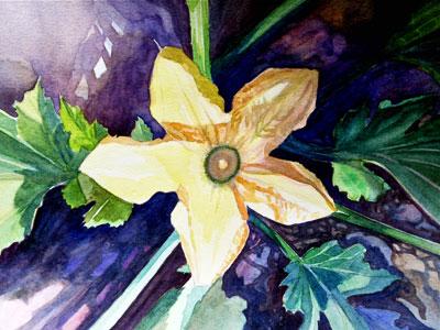 Aquarelle, fleur de courgette