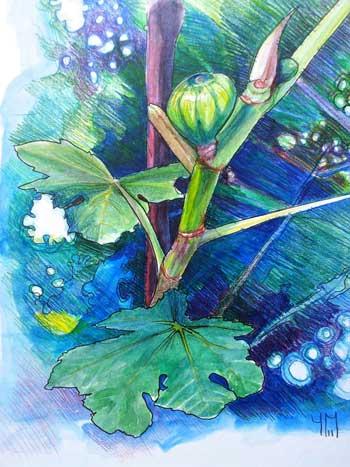 Morac es ficus carica figuier artocarpus - Dessin figuier ...