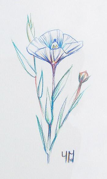 Dessin de Lin bleu