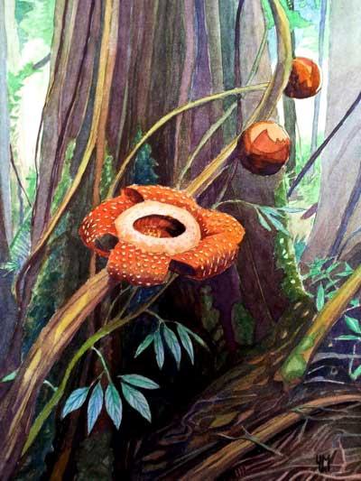 Aquarelle de rafflesie