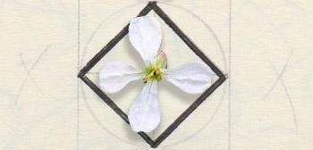 Fleur en croix
