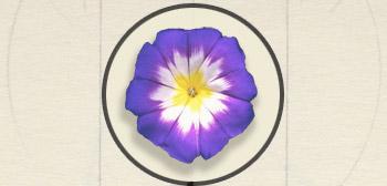 fleur en tube