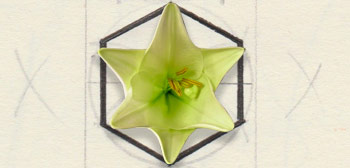 Fleur en hexagramme